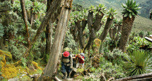 Ruwenzori Mountains Nationalpark